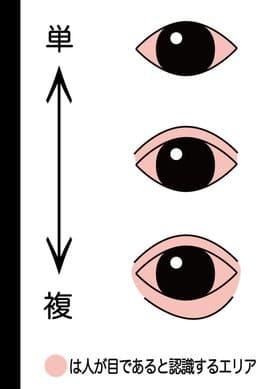 多部未華子の目が変わったのは整形?