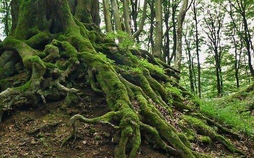 売れる苔の探し方